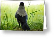 Pigeon With An Attitude Greeting Card