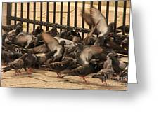 Pigeons In Venice Greeting Card