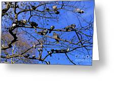 Pigeons Perching In A Tree Together Greeting Card