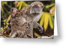 Piggy Back Ride Greeting Card