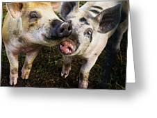 Piggy Love Greeting Card