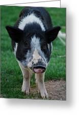 Pigs Ears Greeting Card