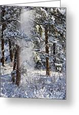 Pike National Forest Snowstorm Greeting Card