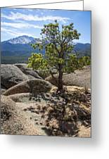 Pikes Peak Bristlecone Greeting Card