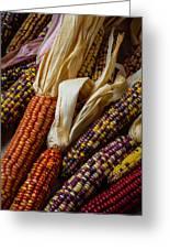 Pile Of Indian Corn Greeting Card