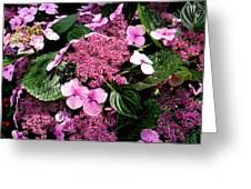 Pile Of Purple Greeting Card