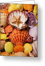 Pile Of Seashells Greeting Card