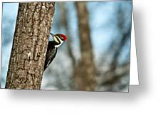 Pileated Billed Woodpecker Pecking 1 Greeting Card