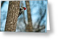 Pileated Billed Woodpecker Pecking 2 Greeting Card