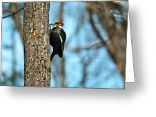Pileated Billed Woodpecker Pecking 3 Greeting Card
