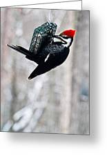 Pileated Billed Woodpecker Pecking 6 Greeting Card