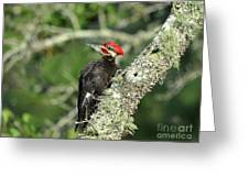 Pileated Perch Greeting Card