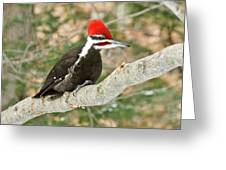 Pileated Woodpecker 6073 Greeting Card