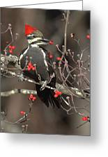 Pileated Woodpecker Lunch Greeting Card