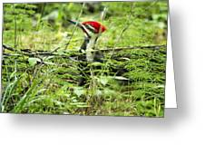 Pileated Woodpecker On The Ground No. 1 Greeting Card