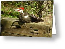 Pileated Woodpecker1 Greeting Card