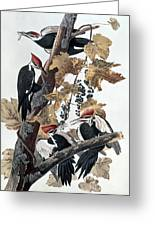 Pileated Woodpeckers Greeting Card