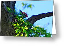 Pileated Woody Wood Pecker Greeting Card