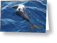 Pilot Whale 3 Greeting Card