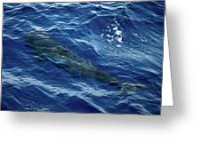 Pilot Whale 4 Greeting Card
