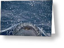 Pilot Whale 7 The Breath Greeting Card