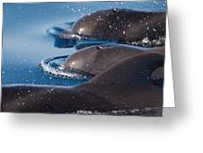 Pilot Whales 1 Greeting Card