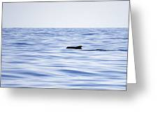 Pilot Whales 2 Greeting Card