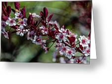 Pin Cherry Blossoms Greeting Card