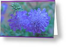 Pin Cushion Flower Greeting Card
