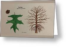 Pin Oak Tree Id Greeting Card