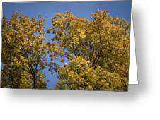 Pin Oaks In The Fall No 1 Greeting Card