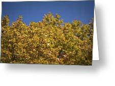 Pin Oaks In The Fall No 2 Greeting Card