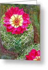 Pincushion Cactus Greeting Card
