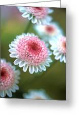 Pincushion Flowers Greeting Card by Kathy Yates