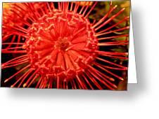 Pincushion Protea Greeting Card