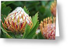 Pincushion Protea Greeting Card