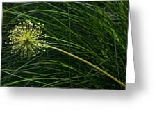 Pincushion Greeting Card