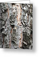 Pine Bark Greeting Card