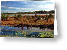Pine Barrens Bog In New Jersey Greeting Card