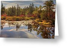 Pine Barrens New Jersey Whitesbog Nj Greeting Card