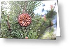 Pine Cone. Greeting Card
