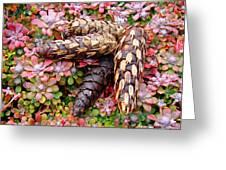 Pine Cones Art Print Botanical Garden Baslee Troutman Greeting Card
