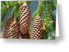 Pine Cones Art Prints Conifer Pine Tree Landscape Baslee Troutman Greeting Card by Baslee Troutman