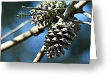 Pine Cones On Dry Branch Greeting Card
