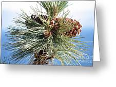 Pine Cones Over Lake Tahoe Greeting Card