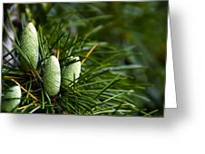Pine Cones Greeting Card