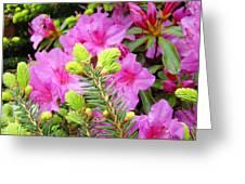 Pine Conifer Art Print Pink Azaleas Flower Garden Baslee Troutman Greeting Card
