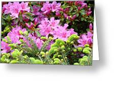 Pine Conifer Pink Azaleas 30 Summer Azalea Flowers Giclee Art Prints Baslee Troutman Greeting Card