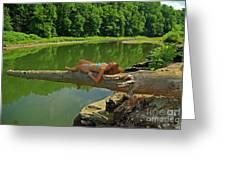 Pine Creek Afternoon Greeting Card
