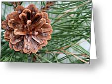 Pine Delight Greeting Card